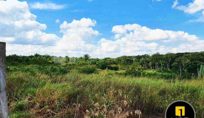 13-propiedad-en-urubo-zona-tarumatu-municipio-porongo-santa-cruz-bolivia