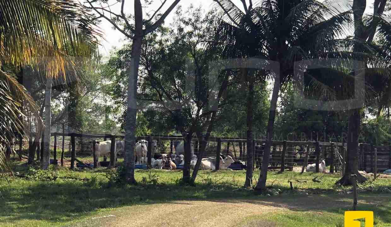 Venta de propiedad ganadera en Portachuelo, Santa Cruz, Bolivia (2)
